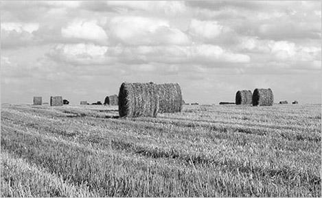 Negoci Agrari
